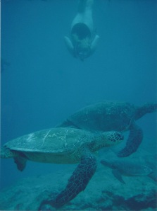 Where the honu are